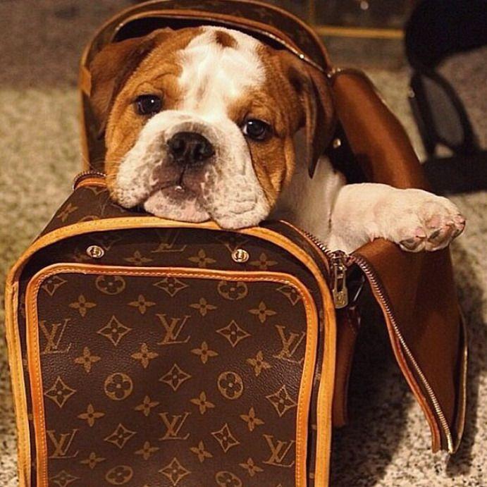 Quel sac pour transporter son chat ou chien